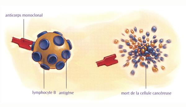 Traitement par anticorps monoclonal