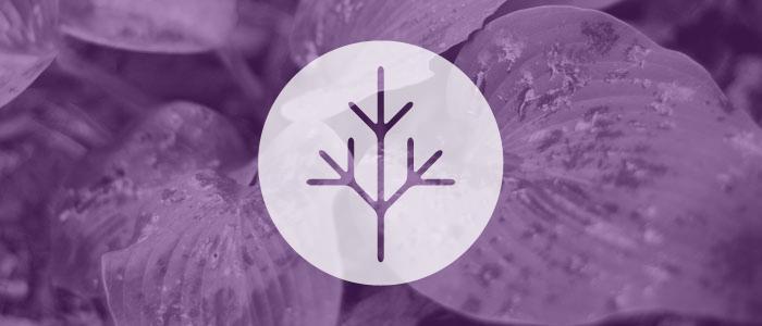 Webinar – Cancer & Fertility
